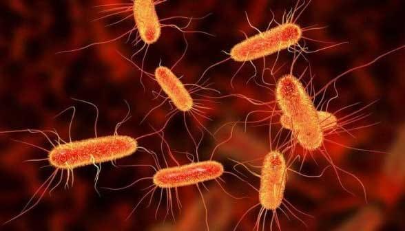 Pas de prise d'antibiotiques en cas d'une infection intestinale. La bactérie Clostridium difficile est l'ennemi redoutable des praticiens en milieu hospitalier. Ce monstre microscopique est responsable de la plus dangereuse des infections intestinales. Près de 30 000 personnes en meurent chaque année aux États Unis des suites d'une d'une infection clostrdiale acquise à l'hôpital.