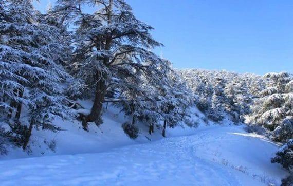 Les chutes de neige continueront d'affecter les reliefs des wilayas de l'Est et du Centre dépassant les 700 mètres d'altitude, indique un bulletin spécial (BMS) émis par les services de l'Office national de la météorologie.
