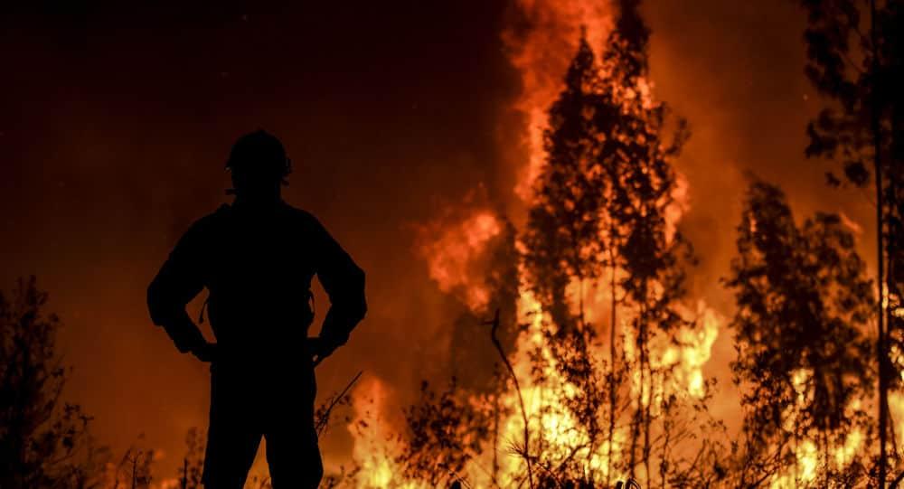 Foret ravagée par les flammes